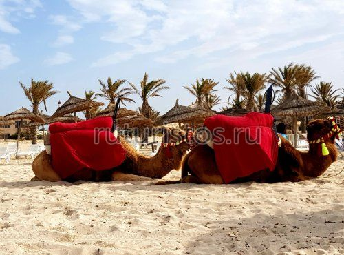 сезон медуз в тунисе по месяцам джерба